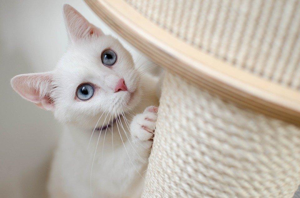 dezamagirea de oameni - poza pisica